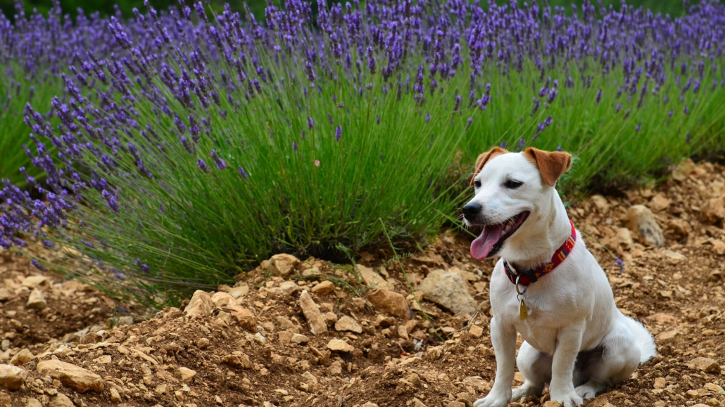Villa Marie Urlaub mit Hund